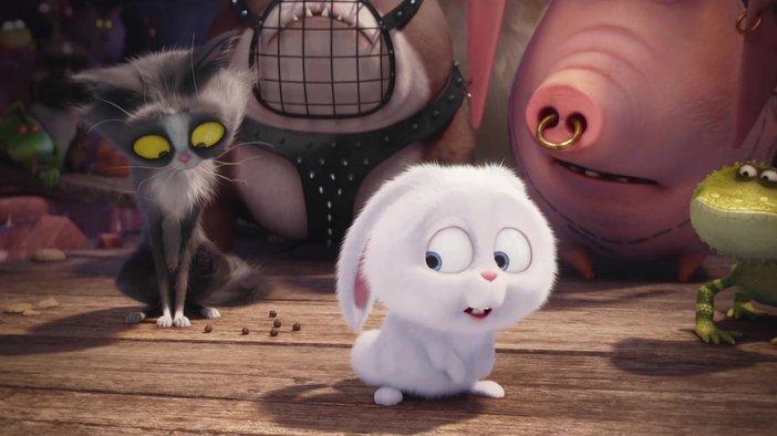 Картинки из мультика - Тайная жизнь домашних животных 14