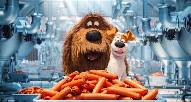 Картинки из мультика - Тайная жизнь домашних животных 8