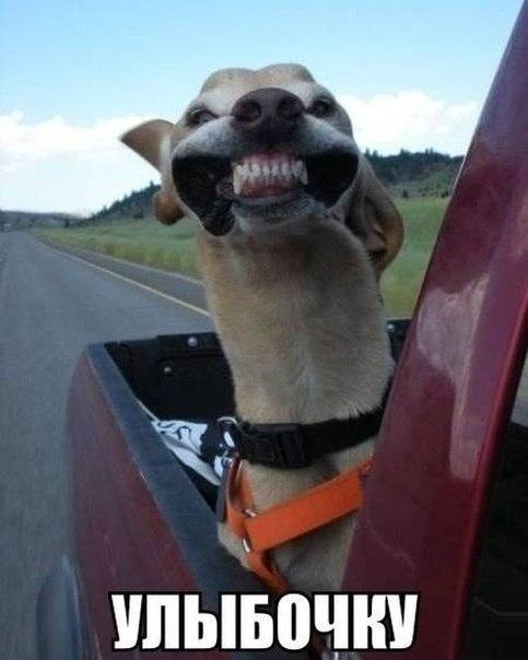 Картинки и фото самых смешных животных с надписями - смотреть 11