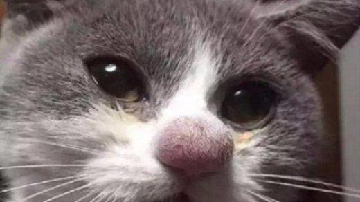 Прикольные и смешные картинки с животными - смотреть бесплатно 11