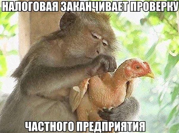 Прикольные и смешные картинки с животными - смотреть бесплатно 19