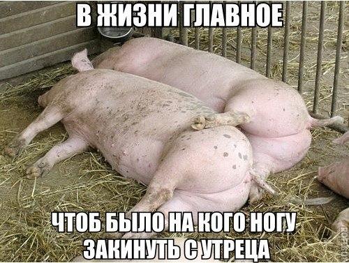 Прикольные и смешные картинки с животными - смотреть бесплатно 4