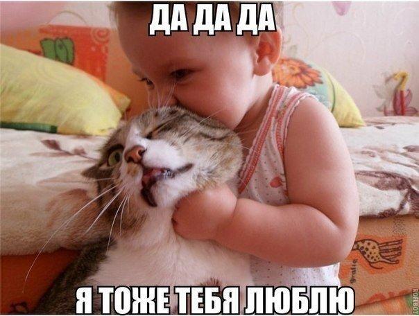 Прикольные и смешные картинки с животными - смотреть бесплатно 6