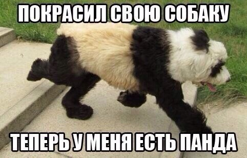 Прикольные и смешные картинки с животными - смотреть бесплатно 7