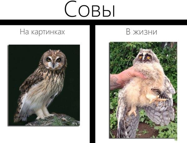 Прикольные и смешные картинки с животными - смотреть бесплатно 8