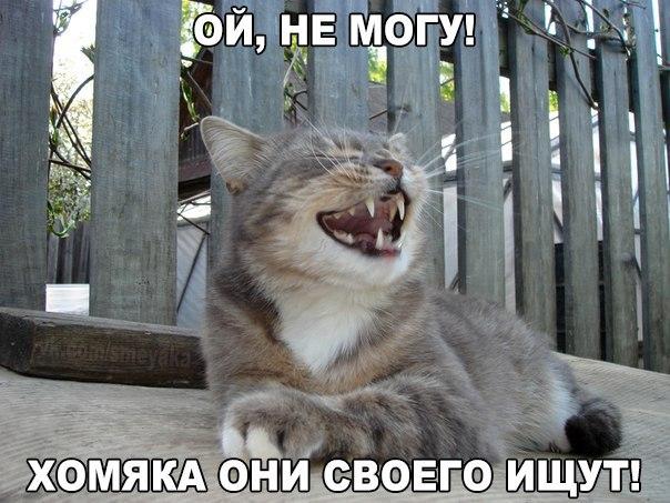 Прикольные и смешные картинки с животными - смотреть бесплатно 9