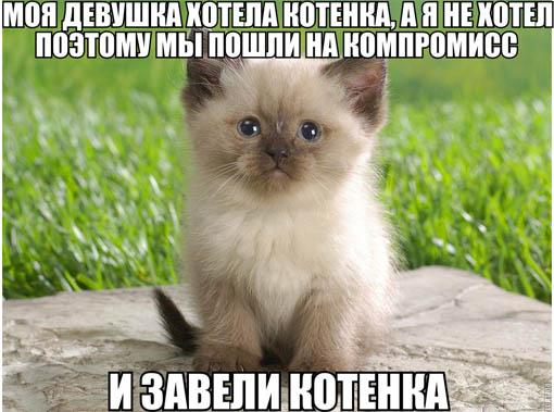 Прикольные картинки и фото котов с смешными надписями 11
