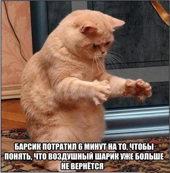 Прикольные картинки и фото котов с смешными надписями 12