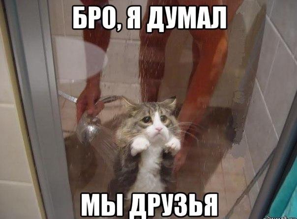 Прикольные картинки и фото котов с смешными надписями 15