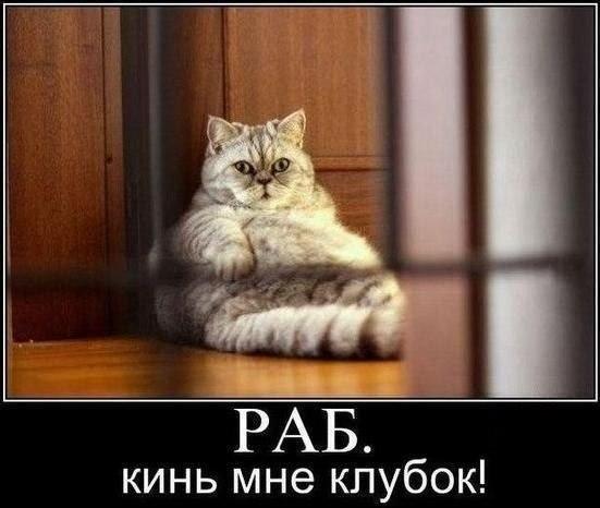 Прикольные картинки и фото котов с смешными надписями 3