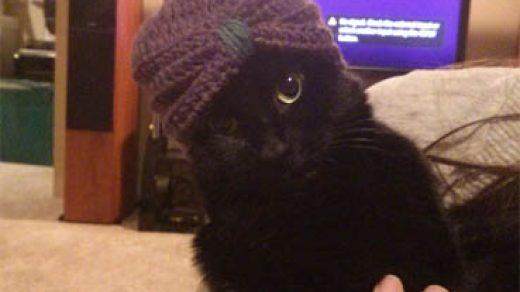 Прикольные картинки и фото котов с смешными надписями 4