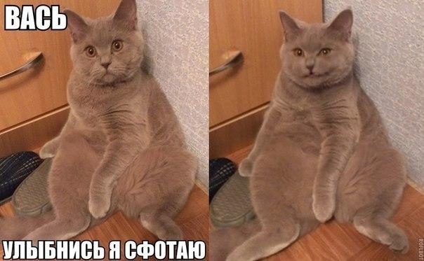 Прикольные картинки и фото котов с смешными надписями 6