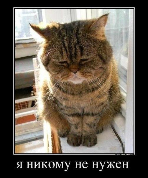 Прикольные картинки и фото котов с смешными надписями 7