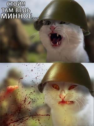 Прикольные картинки и фото котов с смешными надписями 8