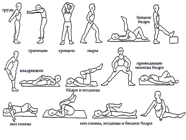 Разминка перед тренировкой в тренажерном зале - упражнения 1