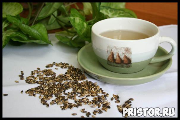 Расторопша - лечебные свойства и противопоказания, применение 3