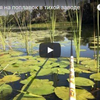 Рыбалка интересные видео - смотреть бесплатно, удивительные, классные