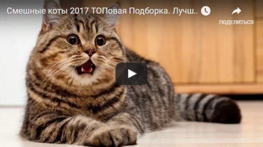 Самые смешные видео про котов до слез - смотреть бесплатно