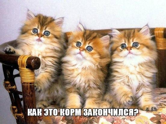 Самые смешные животные в мире - фото, картинки, веселые 1