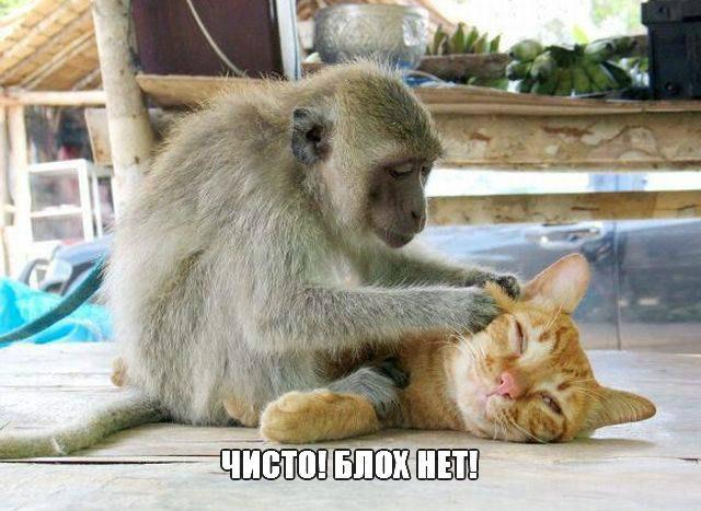 Самые смешные животные в мире - фото, картинки, веселые 11