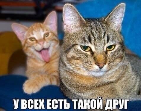 Самые смешные животные в мире - фото, картинки, веселые 14