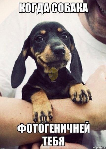 Самые смешные животные в мире - фото, картинки, веселые 19