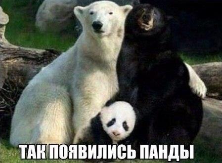 Самые смешные животные в мире - фото, картинки, веселые 2