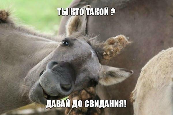 Самые смешные животные в мире - фото, картинки, веселые 20