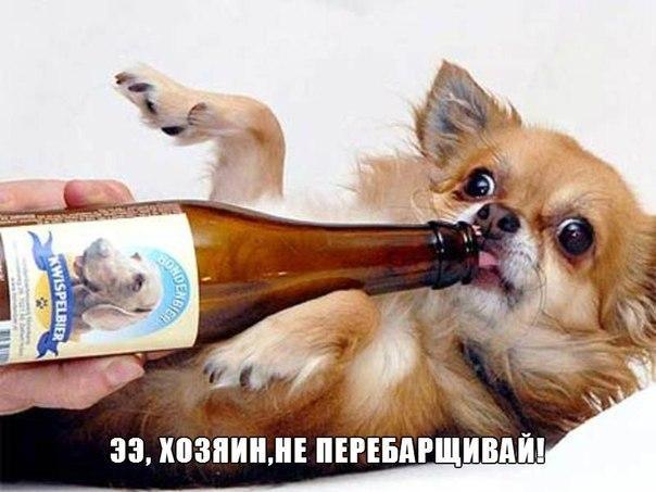 Самые смешные животные в мире - фото, картинки, веселые 3