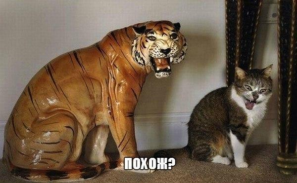 Самые смешные животные в мире - фото, картинки, веселые 6