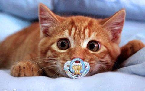 Самые смешные животные в мире - фото, картинки, веселые 7