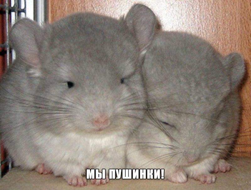 Самые смешные животные в мире - фото, картинки, веселые 9