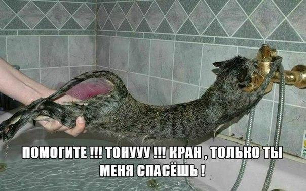 Самые смешные животные фото и картинки - смотреть бесплатно 11