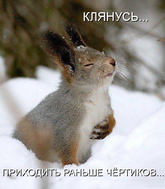 Самые смешные животные фото и картинки - смотреть бесплатно 16