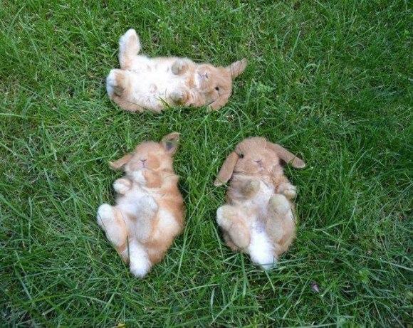 Самые смешные животные фото и картинки - смотреть бесплатно 5