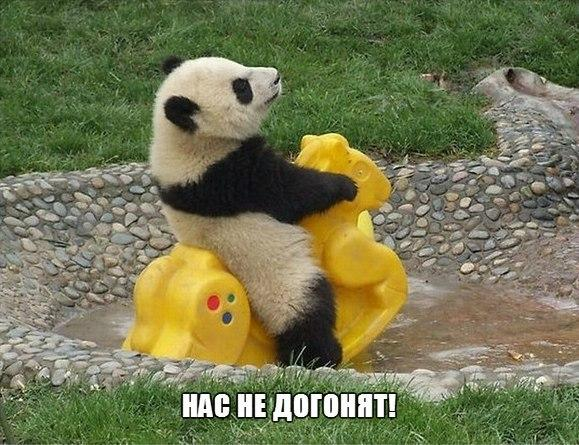 Самые смешные животные фото и картинки - смотреть бесплатно 7