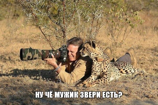 Самые смешные животные фото и картинки - смотреть бесплатно 8