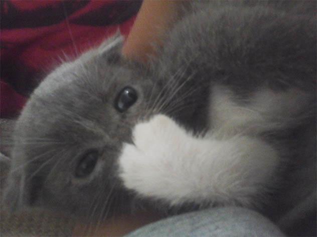 Самые смешные коты фото и картинки - смотреть бесплатно 1
