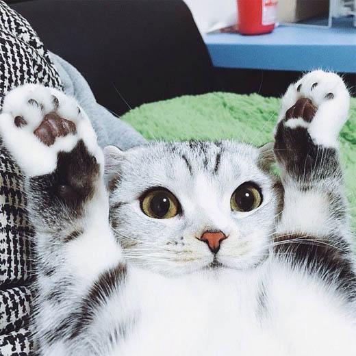 Самые смешные коты фото и картинки - смотреть бесплатно 13