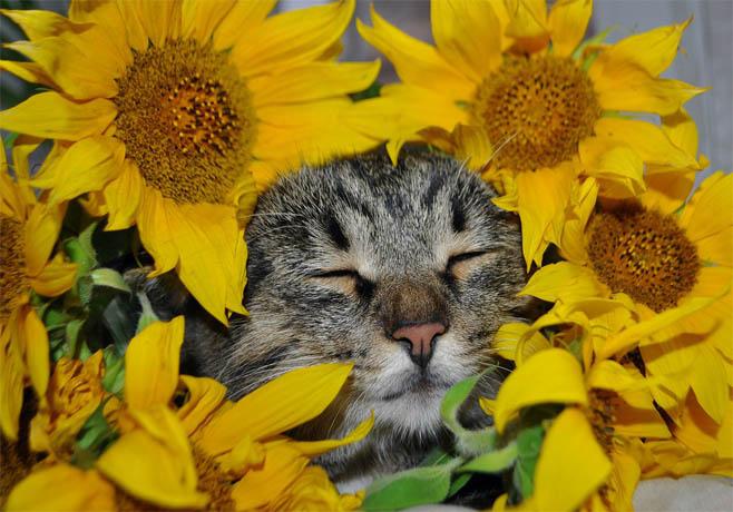 Самые смешные коты фото и картинки - смотреть бесплатно 14