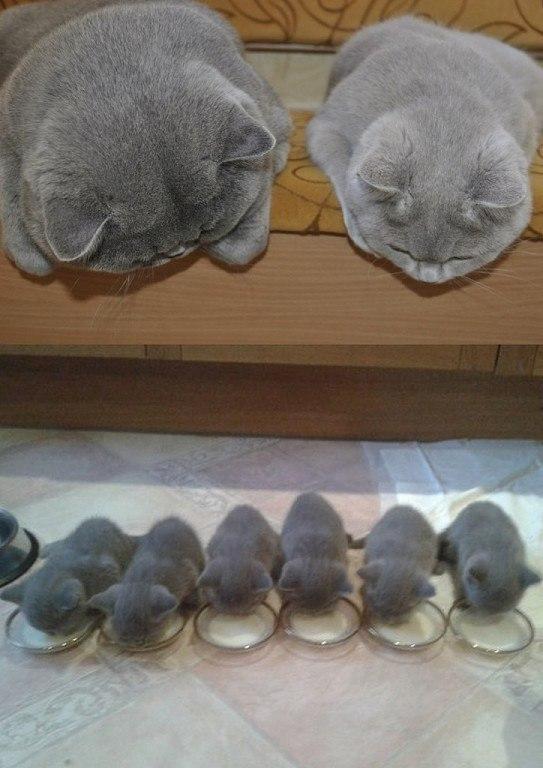 Самые смешные коты фото и картинки - смотреть бесплатно 16