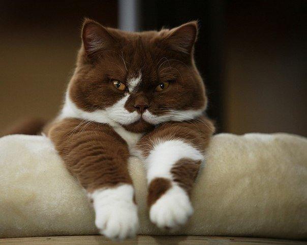 Самые смешные коты фото и картинки - смотреть бесплатно 2