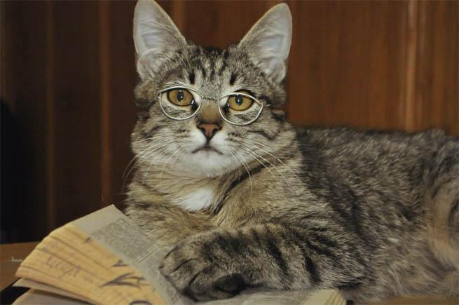 Самые смешные коты фото и картинки - смотреть бесплатно 6