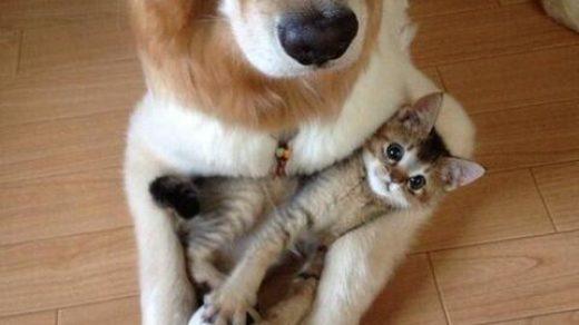 Самые смешные коты фото и картинки - смотреть бесплатно 8