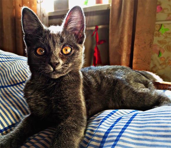 Самые смешные коты фото и картинки - смотреть бесплатно 9