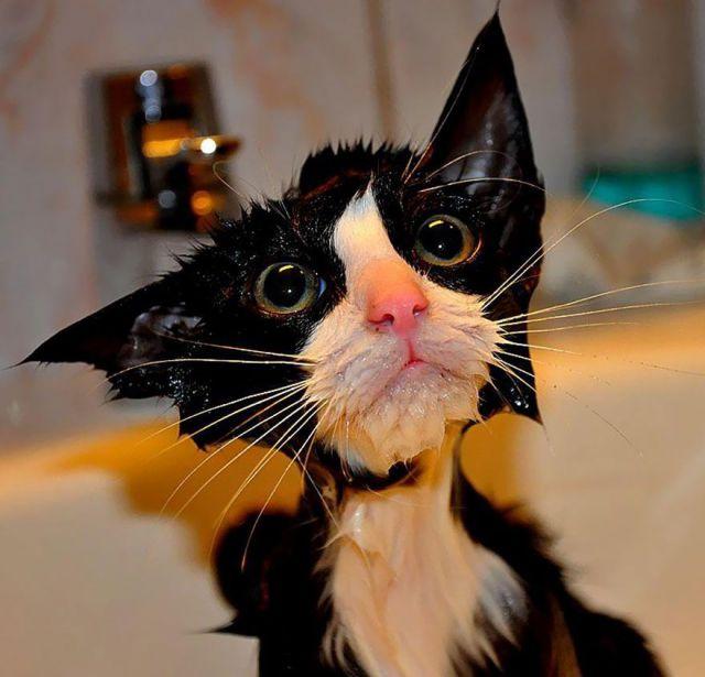 Самые смешные кошки - фото, картинки, прикольные, красивые 10
