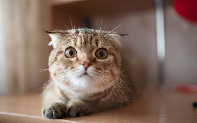 Самые смешные кошки - фото, картинки, прикольные, красивые 11