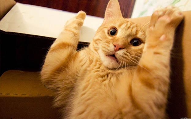 Самые смешные кошки - фото, картинки, прикольные, красивые 12