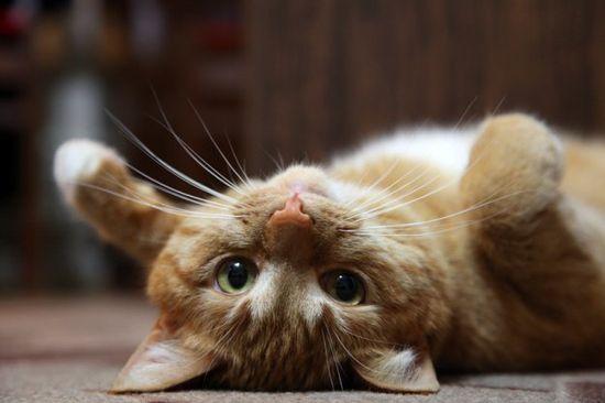Самые смешные кошки - фото, картинки, прикольные, красивые 7