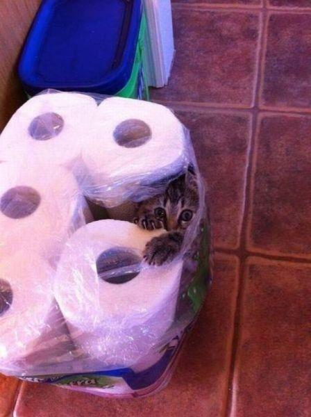 Самые смешные кошки - фото, картинки, прикольные, красивые 9
